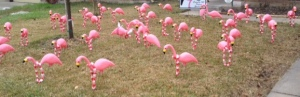 Flamingos Part 2